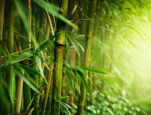 Image of Bamboo Plants - Bamboo Cooling Sheets