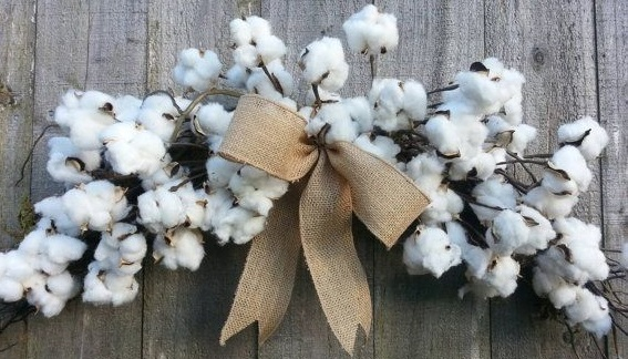 A Bouquet of Cotton Bolls - What is Pima Cotton