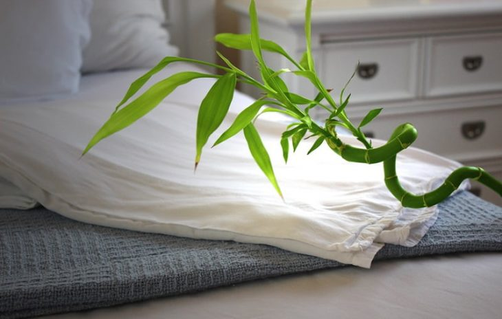 Image of A Bamboo Plant on a Bed - Bamboo Cooling Sheets